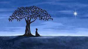 yogi under tree